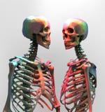 Ein paar polygonales Skelett in der Regenbogenfarbe auf hellem backgr Lizenzfreies Stockbild