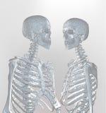 Ein paar polygonales Skelett im weichen Licht auf weißem Hintergrund Lizenzfreie Stockfotos