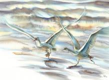 Ein Paar Schwäne, die herauf Aquarell steigen lizenzfreies stockbild