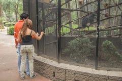Ein Paar von den jungen Liebhabern, die eine Reise zu einem Zoo in Mexiko-Verdichtereintrittslufttemperat genießen Stockbilder