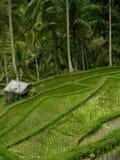 Ein Paddy-Feld Stockfoto