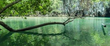 Ein Panorama eines Baums, der über dem Wasser sich lehnt Stockfotografie