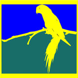 Ein Papagei Lizenzfreies Stockfoto