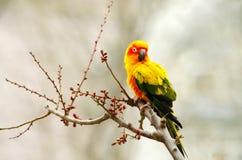Ein Papagei auf einem Baum lizenzfreie stockfotos