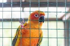 Ein Papagei in einem Käfig lizenzfreies stockbild