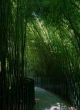 Ein parh im Bambus Lizenzfreie Stockbilder