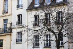 Ein Paris-Haus und ein schwarzes Baumschattenbild Lizenzfreies Stockbild