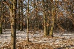 Ein Park im Winter, in den Blättern und im Schnee; Polen lizenzfreie stockfotografie