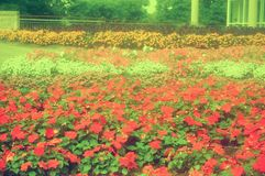 Ein Park nahe Niagara Falls, Kanada lizenzfreie stockfotos