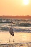 Ein Pelikan auf dem Strand bei Sonnenaufgang Stockfotos