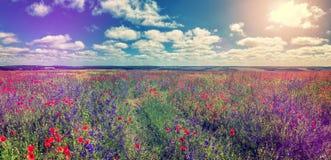 Ein perfekter Himmel, der im Sonnenlicht an einem Sommertag über der flowefs Wiese glüht Lizenzfreie Stockfotos