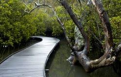 Ein Pfad durch die Mangroven Lizenzfreie Stockbilder