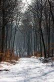 Ein Pfad in einem Wald Lizenzfreie Stockfotos