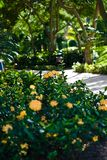 Ein Pfad in einer tropischen Rücksortierung Lizenzfreies Stockfoto