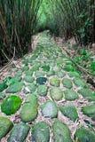 Ein Pfad führt durch üppigen Wald Lizenzfreie Stockfotografie