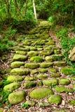 ein Pfad führt durch üppigen Wald Stockfotografie