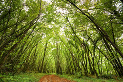 Ein Pfad im Wald. lizenzfreie stockbilder