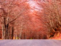 Ein Pfad im Wald Lizenzfreie Stockbilder