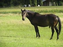 Ein Pferd Lizenzfreies Stockfoto