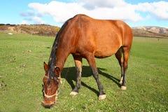 Ein Pferd Stockfotografie