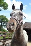 Ein Pferd Stockbild