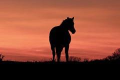 Ein Pferd bei Sonnenuntergang Lizenzfreies Stockbild