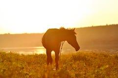 Ein Pferd bei Sonnenuntergang Stockbild