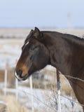 Ein Pferd, das über einem Zaun schaut Stockbild