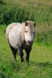 Ein Pferd, das auf dem Gebiet steht Lizenzfreie Stockfotos