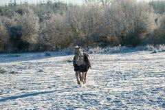 Ein Pferd, das eine Winterdecke trägt Lizenzfreies Stockbild