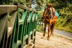 Ein Pferd, das einen Sitz auf seiner Rückseite und an einem Eisengeländer auf einem Straßenrand gebunden trägt lizenzfreie stockfotos