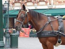 Ein Pferd an den alten Schleppseilen Stockfoto
