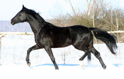 Ein Pferd an der Freiheit Stockfotografie