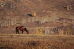 Ein Pferd in der Sonneleuchte Stockbild