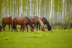 Ein Pferd in einer Waldlichtung Ein helles Sommerfoto Die Beschaffenheit des Dorfs, Stockbild