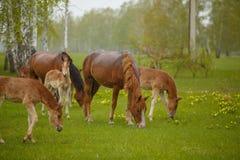 Ein Pferd in einer Waldlichtung Ein helles Sommerfoto Die Beschaffenheit des Dorfs, Stockfotos