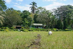 Ein Pferd in einer Weide mit typischem Haus Costa Rica Lizenzfreie Stockfotos