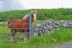 Ein Pferd am Gatter Lizenzfreie Stockfotos