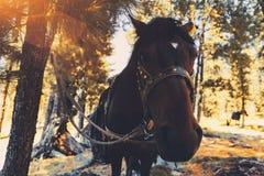 Ein Pferd gebunden an einem Baum Lizenzfreies Stockbild
