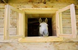 Ein Pferd im Fenster Stockbild