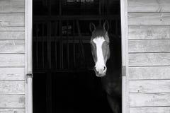 Ein Pferd im Stall Stockbilder