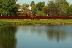 Ein Pferd im Yard Stockfotografie