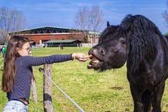 Ein Pferd isst von der Hand eines M?dchens, junges M?dchen einzieht ihr Pferd aus ihrer Hand heraus, F?tterungspferde des M?dchen lizenzfreies stockbild