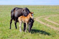 Ein Pferd mit einem Fohlen auf der Wiese Lizenzfreie Stockfotos