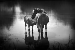 Ein Pferd mit einem Fohlen im Teich. Lizenzfreie Stockfotografie