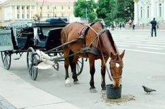 Ein Pferd spannte zu einem Wagen isst Hafer auf einer Stadtstraße vor lizenzfreie stockfotos