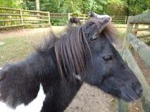 Ein Pferd und ihre Freunde, die Sie aufpassen stockfotos