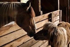 Ein Pferd und miniture Pferderührenden Nasen Lizenzfreies Stockfoto