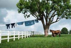 Ein Pferd und ein Pony stellen mit einer Seite der amischen Wäscherei dar stockfotos