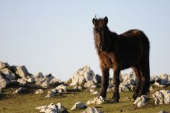 Ein Pferd, welches die Kamera steht und betrachtet Stockbilder